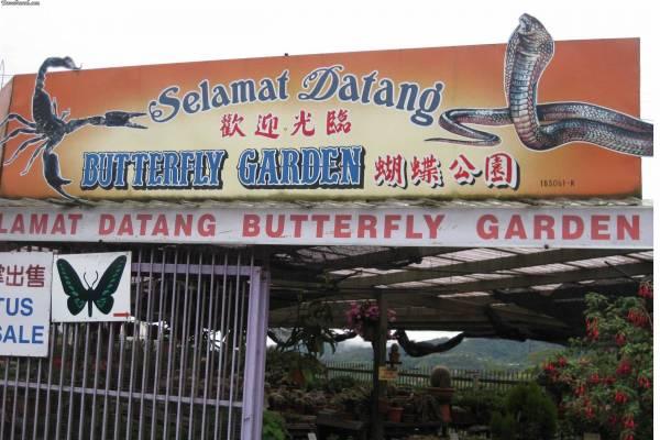 تقرير رحلتى الى مرتفعات الكاميرون الرائعة فى ماليزيا بالصور