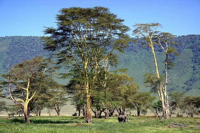 تقرير مصور عن الاماكن السياحيه فى تنزانيا 2014
