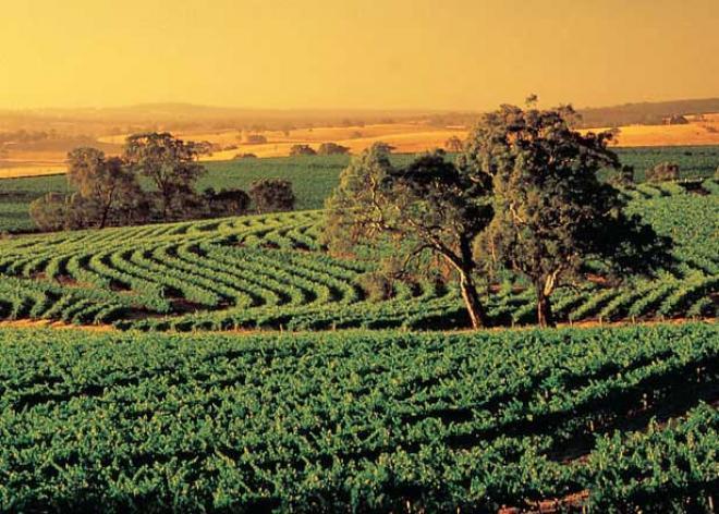 وادى باروسا Barossa Valley ( احد اجمل واهم الاماكن السياحية فى استراليا)