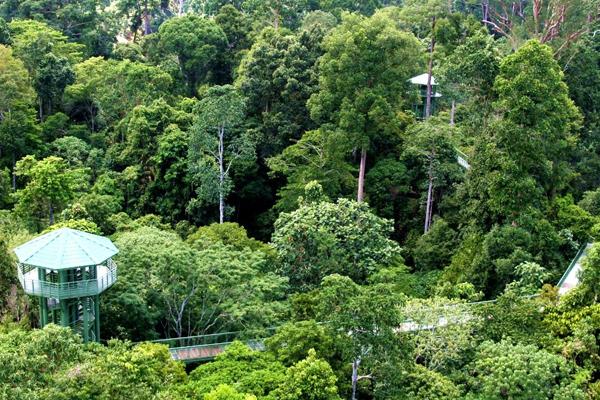 مركز استكشاف الغابات المطيرة صباح ماليزيا
