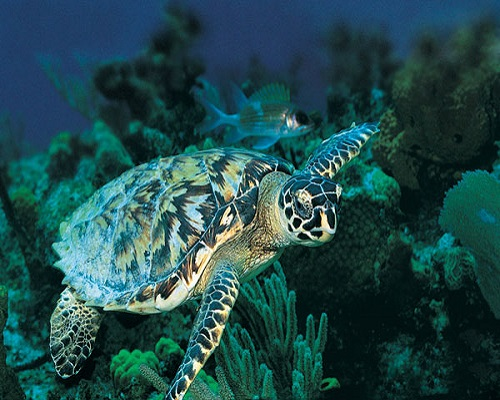 جزر السلاحف في افضل الجزر فى ولاية صباح ماليزيا
