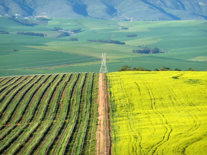 كيب ينيلاندس Cape Winelands (اهم واجمل الاماكن السياحية فى جنوب افريقيا)