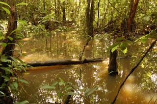 غابات المنجروف أو كما تعرف بMangrove ( صور رائعة من ماليزيا)