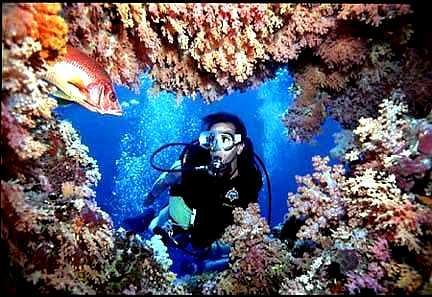 روعة الغطس فى المياة الدافئة في جزر المالديف بصفائها وشفافيتها على مدار العام