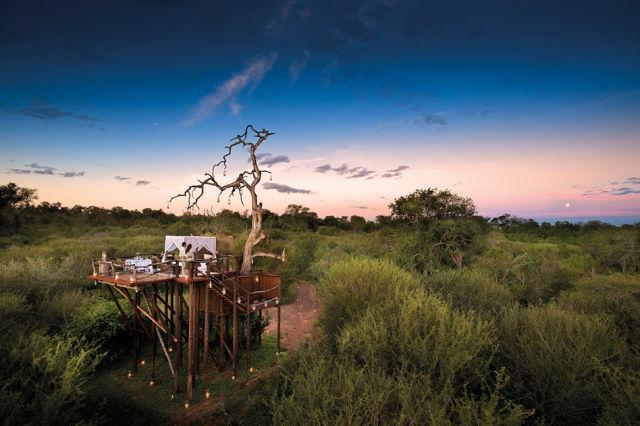 الحياة البرية المذهلة في أفريقيا