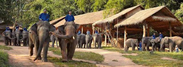 أنانتارا المثلث الذهبي ومنتجع كامب، تايلاند الفيل