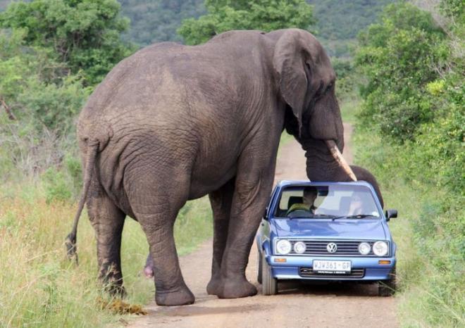 رحلة سياحيه الى جنوب افريقيا