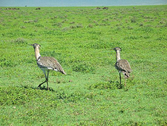 تقرير مصور عن السياحة فى تنزانيا بالصور
