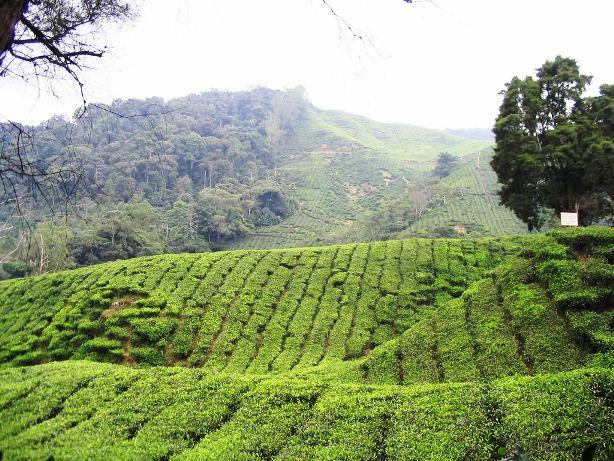 صور ولاية باهانج شبه الجزيرة الماليزية - ولاية الحدائق