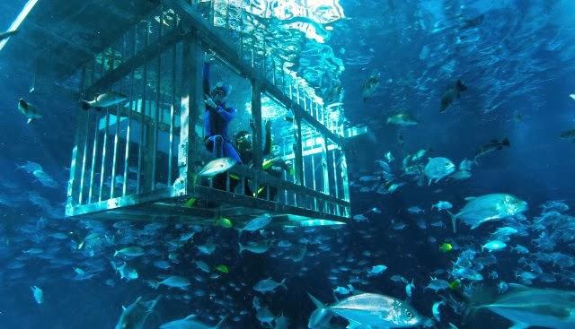 أكواريوم دبي من أكثر الأماكن شهرةً وجمالاً