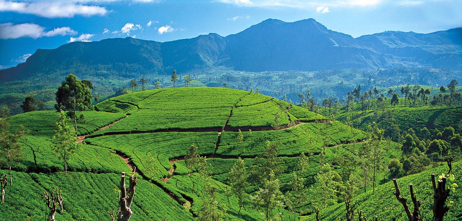 سريلانكا واحدة من البلاد الرائعة الجمال
