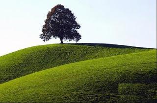 سحر الطبيعة في الريف البلجيكي