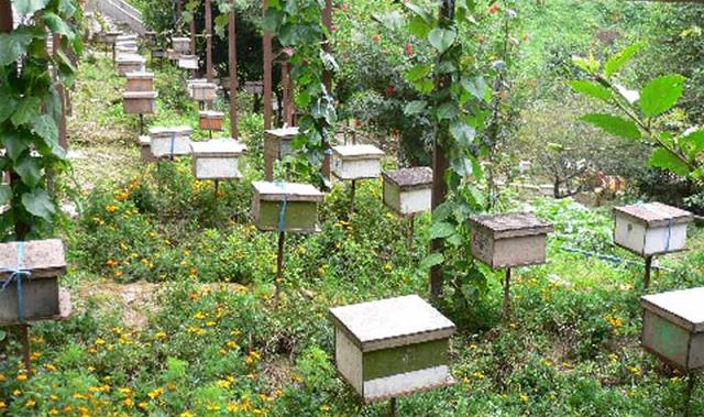 مزارع مناحل العسل في الكاميرون هايلاند بماليزيا