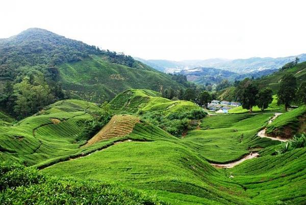 صور مرتفعات الكاميرون في ماليزيا