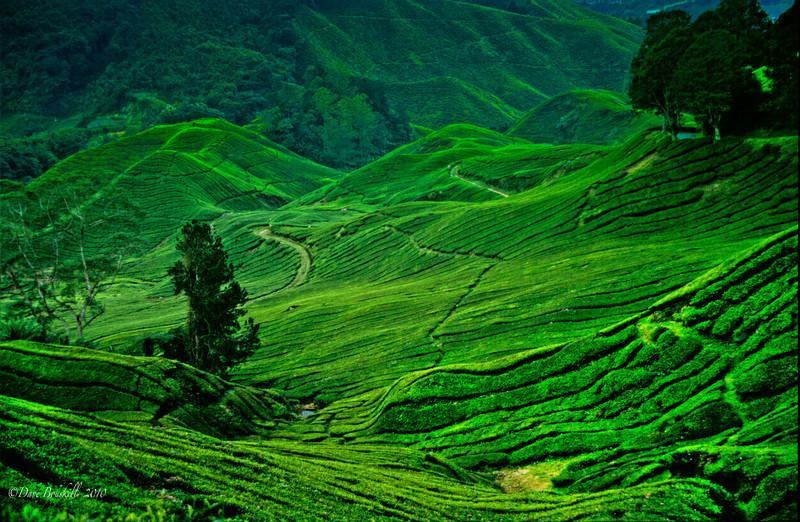 صور من ماليزيا - كاميرون هايلاند