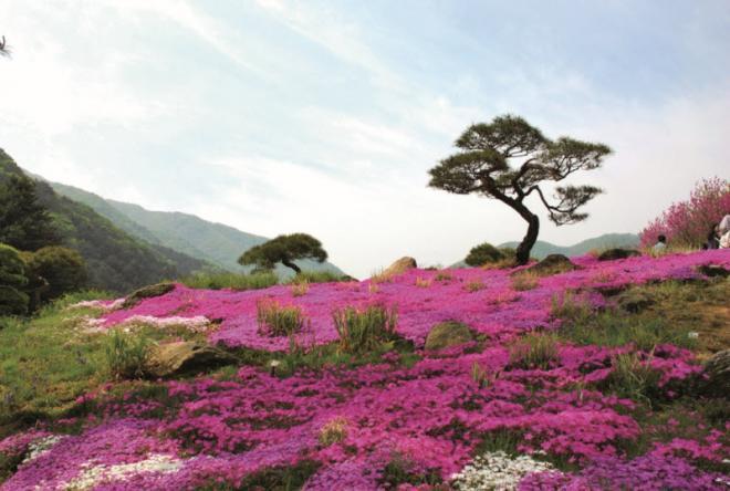 حديقة كوريا الجنوبيا اجمل حدائق العالم