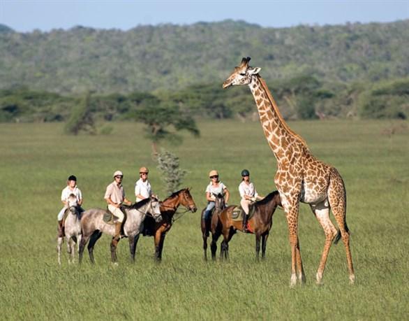 سفاري ركوب الخيل... في محمية ماساي مارا في كينا