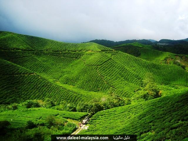 اجمل الصور الطبيعيه في ماليزيا