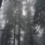 أجمل صور ومعلومات حدائق ريدوود الوطنية فى كاليفورنيا 2015