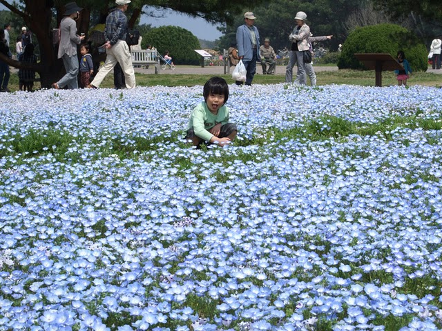 صور حديقة الجريس اليابانية 2015