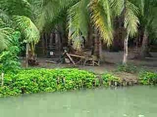 نهر لوبوك في جزيرة بوهول