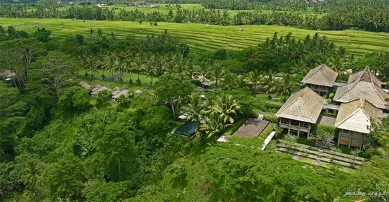صور منتجع مايا أوبود في جزيرة بالي