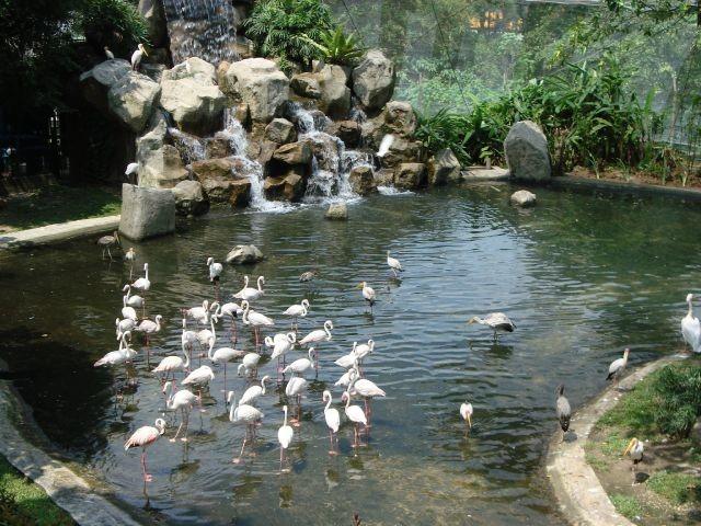 تقرير زيارتي الى ماليزيا ( كوالالمبور + لنكاوي ) 2014