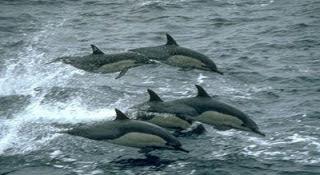 صورشاطئ لوفينا مع الدلافين الرائعة في بالي