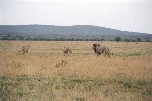 صور منتجع Makanyane الأفريقي