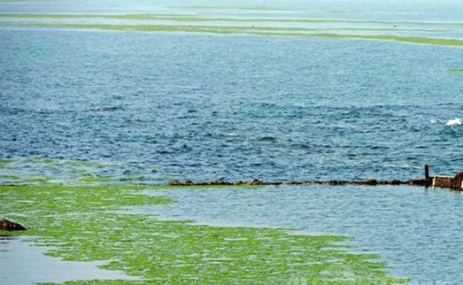 صور الشاطىء الاخضر في الصين اغرب الشواطىء