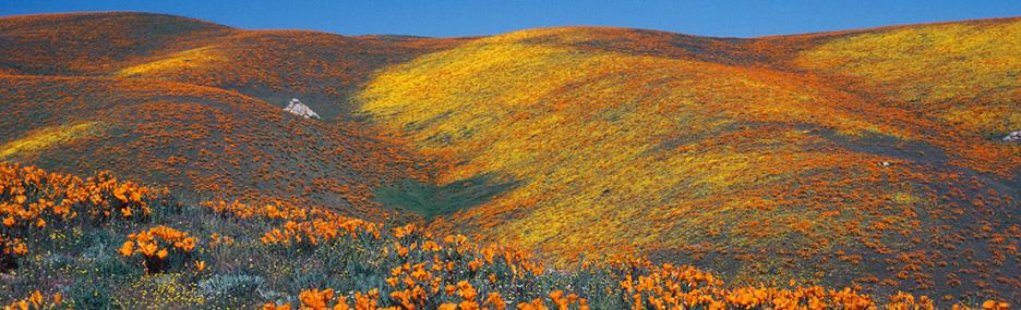 صور وادي أنتيلوب في كاليفورنيا