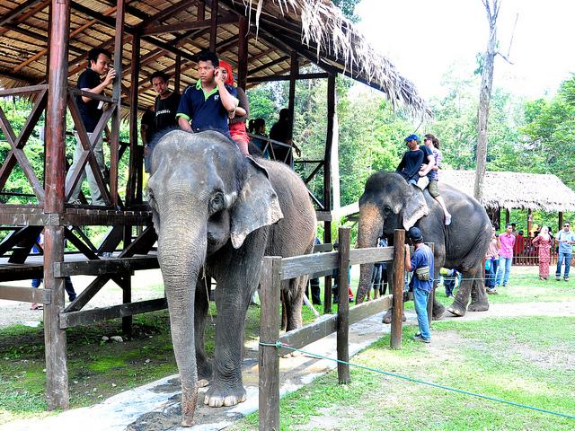 رحلة إلى محمية رعاية الفيلة اليتيمة ( سياحة ماليزيا 2015)