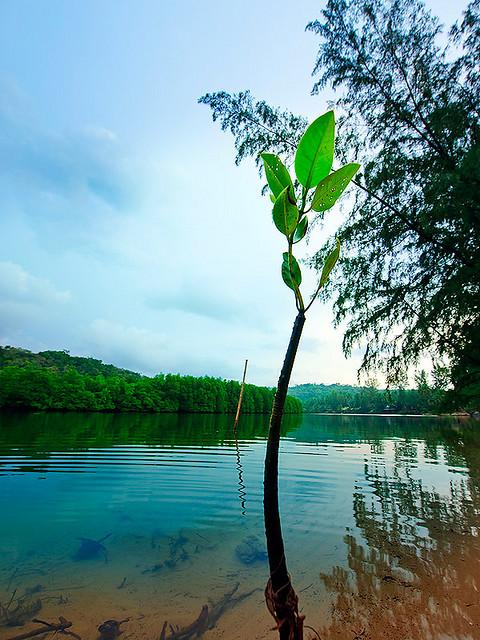صور اقامتى فى جزيرة كوه كود koh kood فى تايلاند