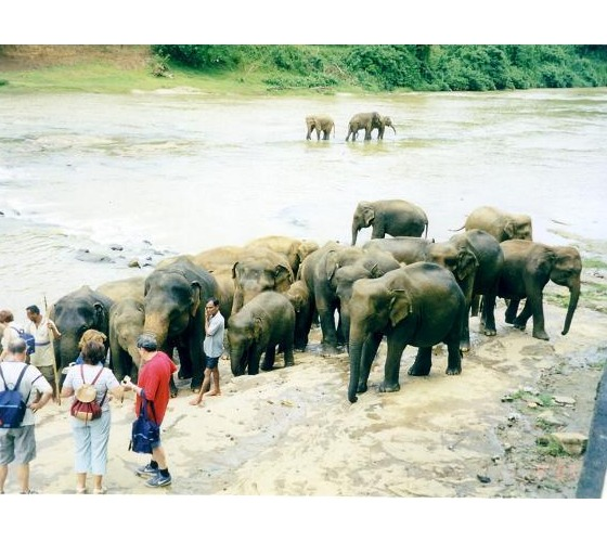 السياحة في سيرلانكا2015