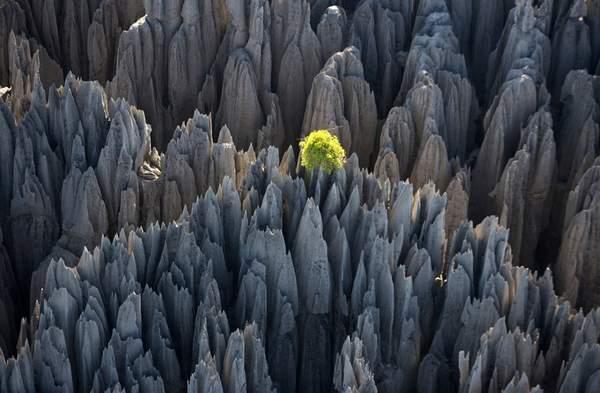 غابة الأحجار في جزيرة مدغشقر بالصور,السياحة في جزيرة مدغشقر
