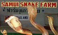 صور مزرعة الأفاعي في كوساموي, المعالم السياحيه فى تايلاند