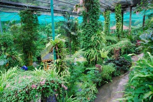 حديقة الفراشات من معالم ماليزيا