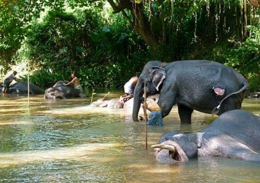 سريلانكا الرائعة بالصور