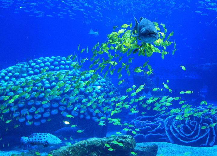 منتجع المحيطات في الصين