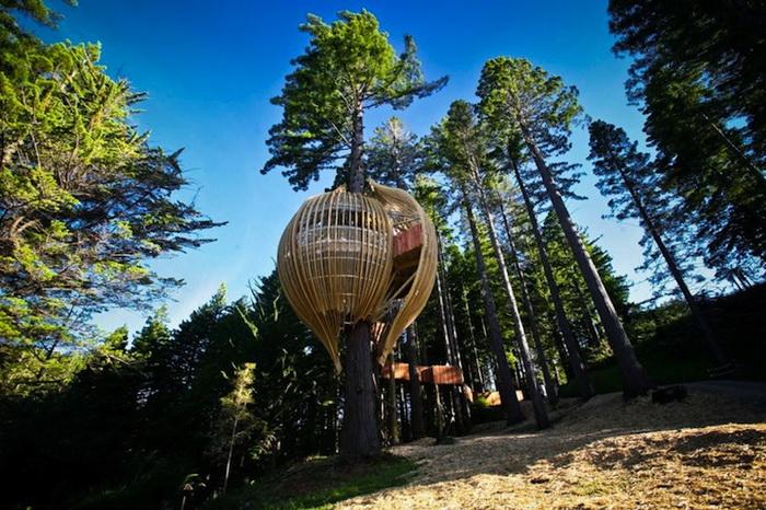 مطعم في نيوزيلندا على شكل شجرة .. صور