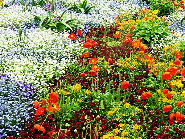 مايناو جنة الزهور في شتوتجارت الالمانية