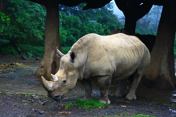 حديقة تامان سفاري إندونيسيا: مواجهة مع الحيوانات المفترسة