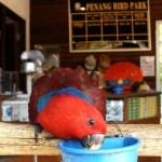 صور حديقه الطيور فى بينانج ماليزيا