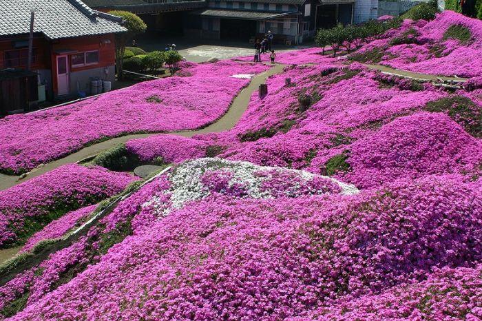 حديقه هيتسو جي ياما في اليابان - تقرير مصوّر