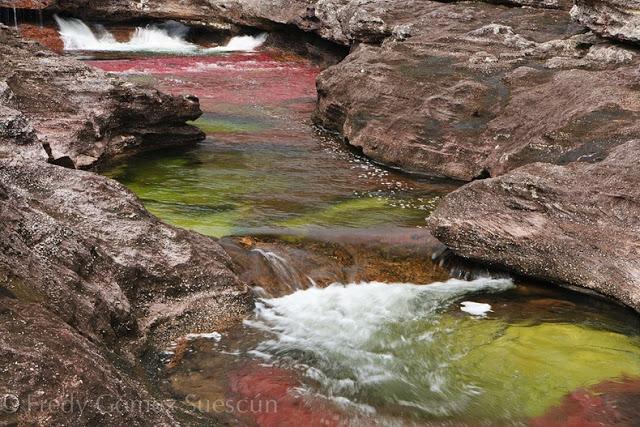 نهر الألوان ( كولومبيا ) صور 2014