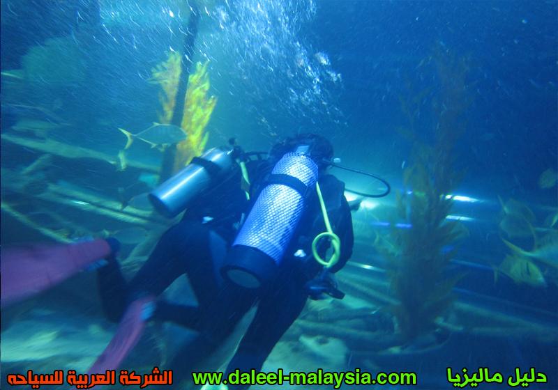 الان تباع هنا تذاكر ( اكواريا Aquaria KLCC عالم ما تحت الماء ) و ( تذاكر العاب صنواى