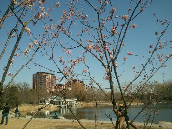 من المعالم السياحيه فى الصين ( بحيرة اليشم (يويوانتان بارك) صور 2013